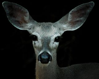 Here's looking at you, Bambi!