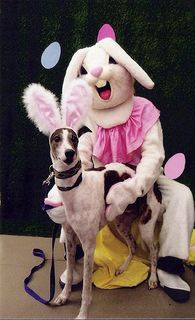 What exactly are you trying to do to the dog, Mr. Bunny?